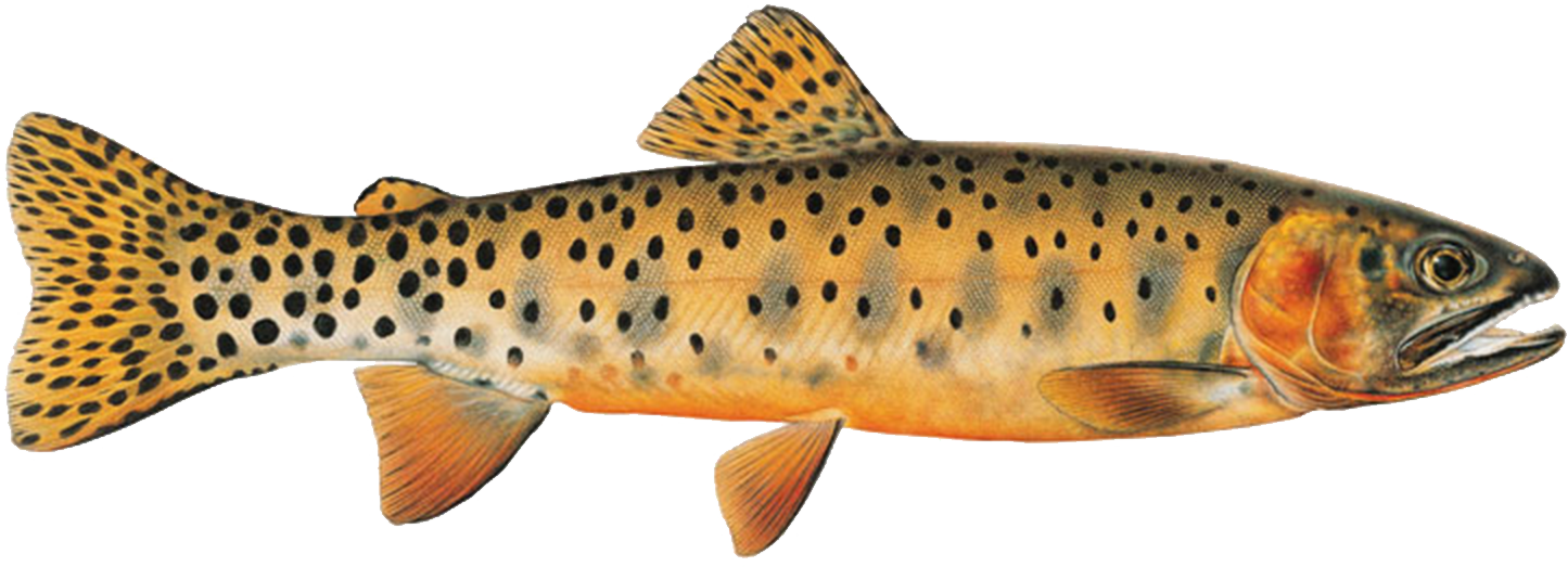 Westslope Cutthroat Trout Range