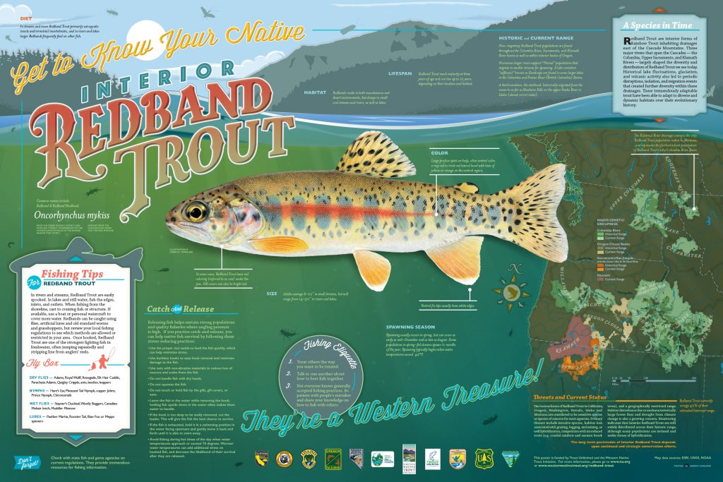 Redband Trout – Western Native Trout